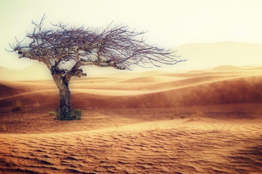 完全、砂漠気分?